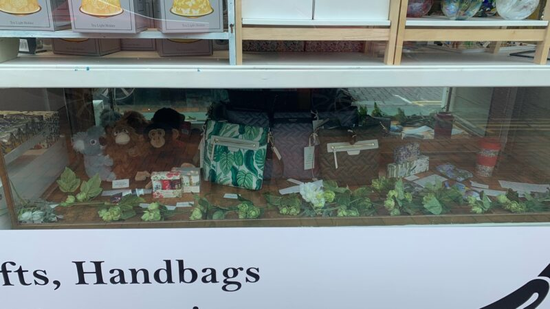 Our Environmental Window